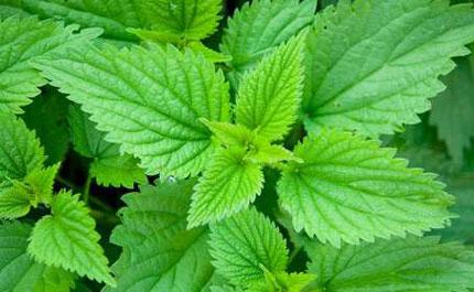گیاهانی که با کم خونی مبارزه می کنند