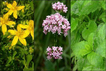 ۵ گیاه دارویی برای مقابله با استرس
