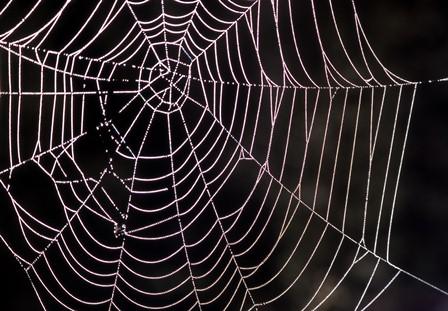 شناخت فواید تار عنکبوت