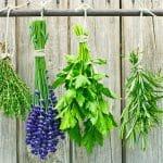 گیاهان دارویی که اثرات درمانی دارند