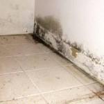 کپک خانگی و خطرات ناشی از آن