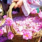ترکیب سه گیاهی که به جنگ افسردگی می رود