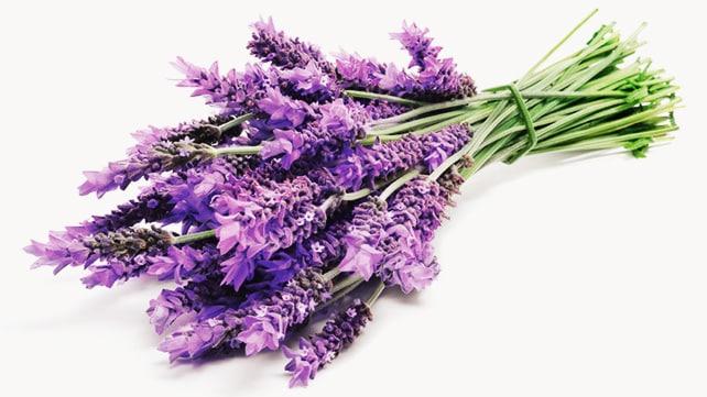 گیاهان دارویی که خاصیت آرامش بخش دارند