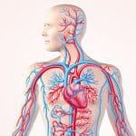 بهبود گردش خون ضعیف با مصرف منظم ۱۱ ماده غذایی